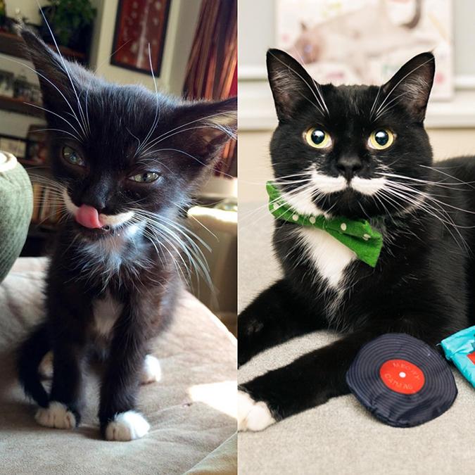 rescue pet photos of harvey the cat