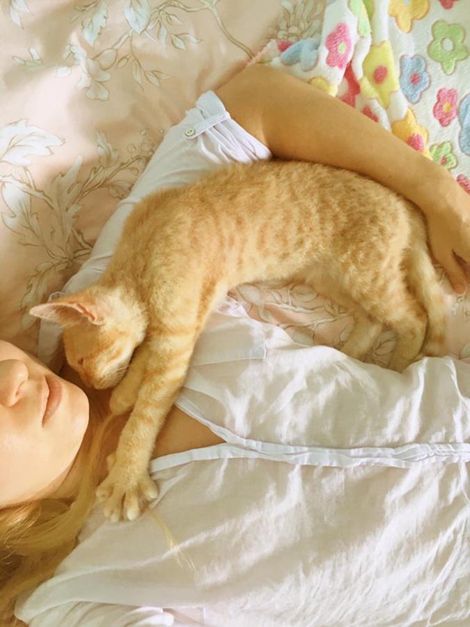rescue pet photos-russian ginger cat