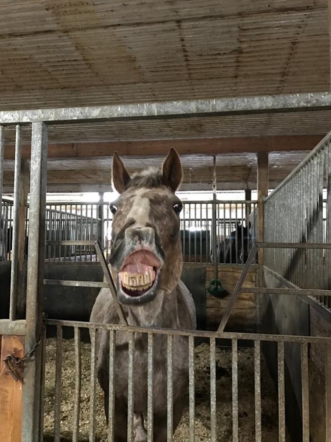 rescue pet photos-strawberry the horse