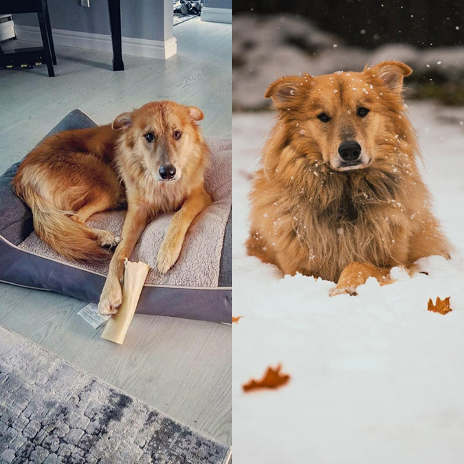 rescue pet photos-two years after adoption