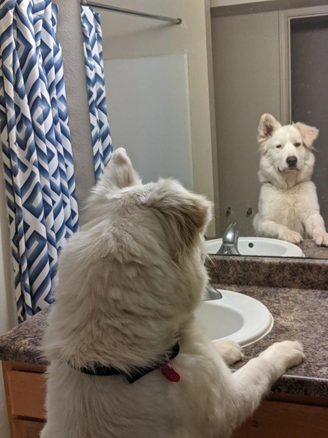 ruggedly handsome adopted dog