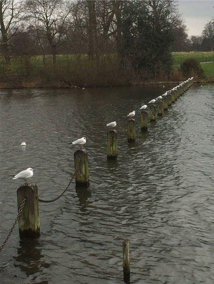 seagulls feet apart