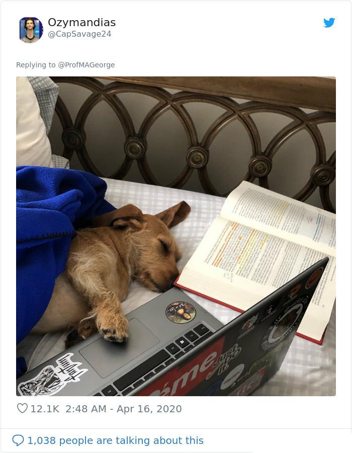 sleepy dog study buddy