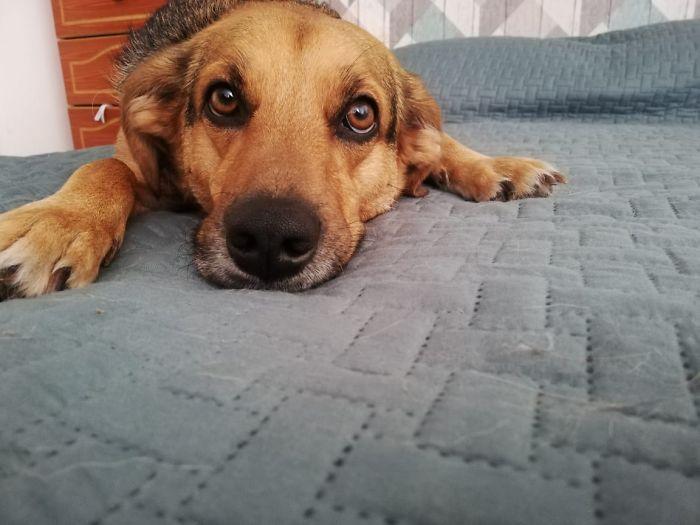 small apartment dog they said