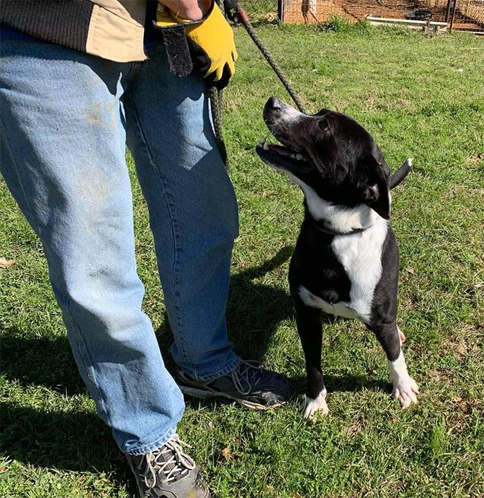 speck bullock county humane society
