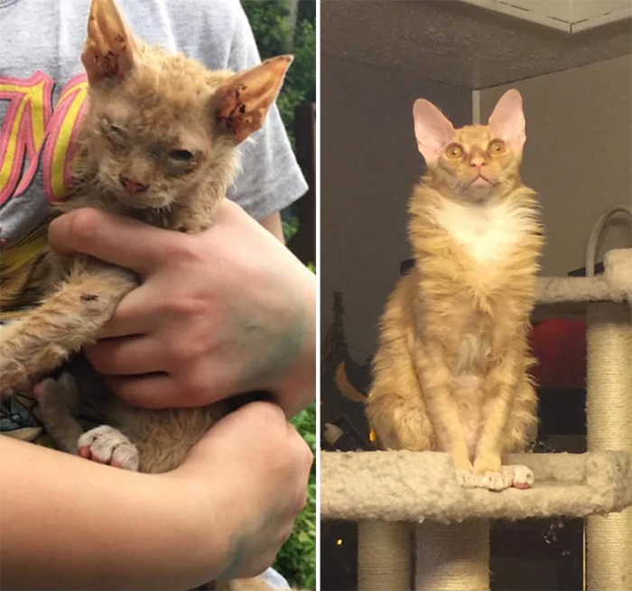 stitchey before and after adoption