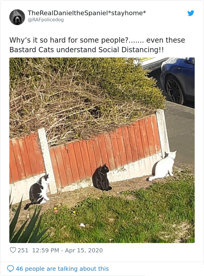stray cats during pandemic crisis
