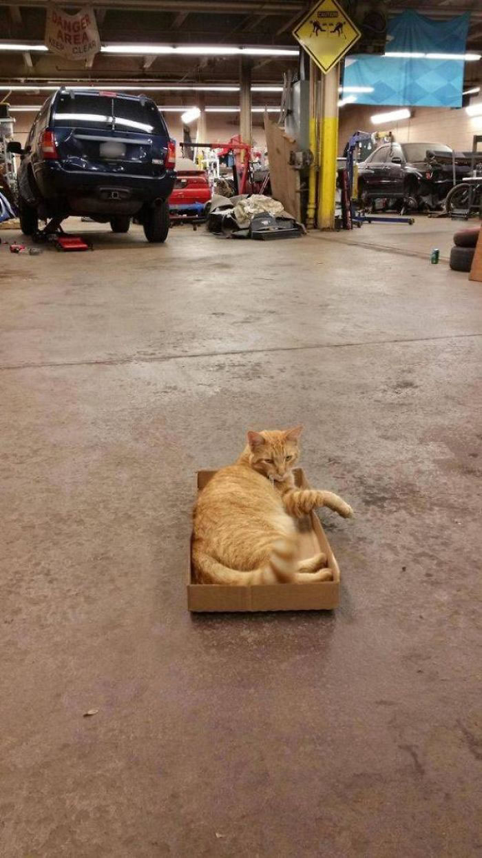 stray kitty in auto shop