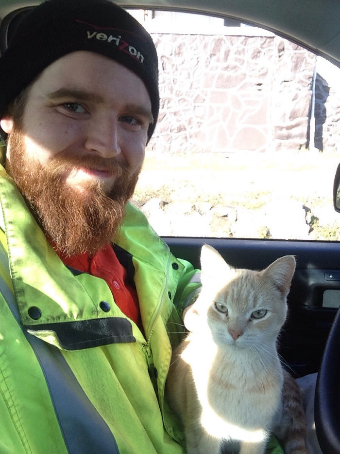 stray kitty jumped up in truck