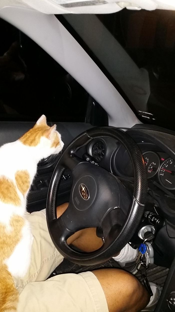 stray kitty jumps in car