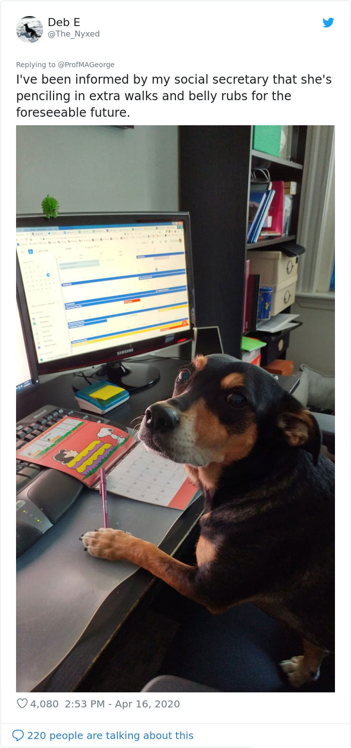 students online classwork with pet dogs