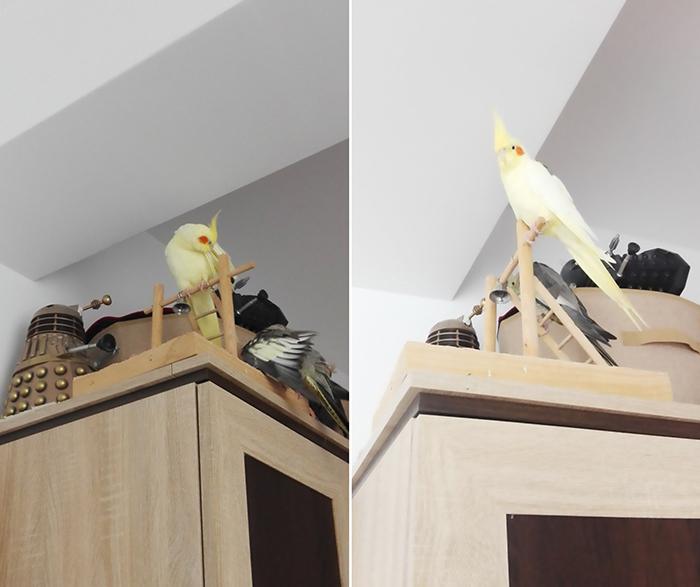 supervisor bird