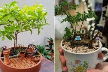 teacup gardens