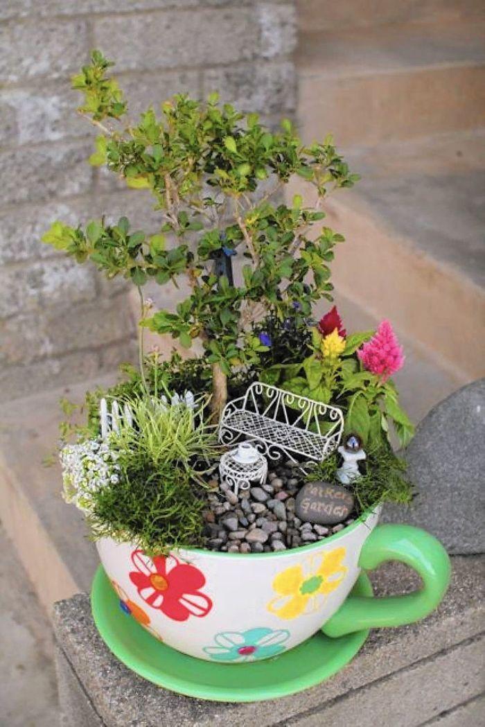 teacup gardens small plants