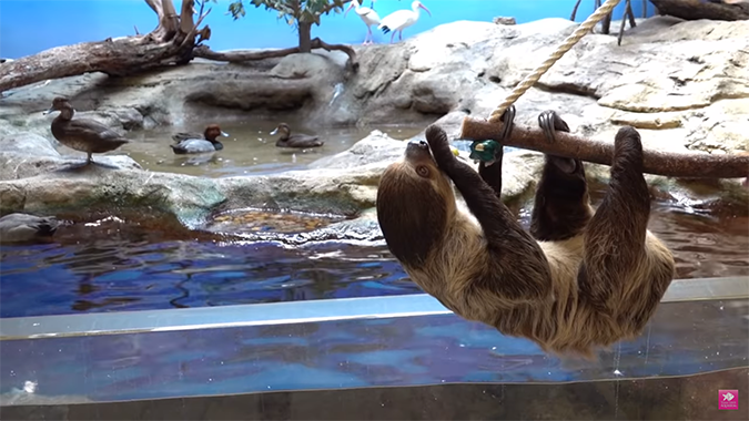 texas state aquarium ducks and sloth