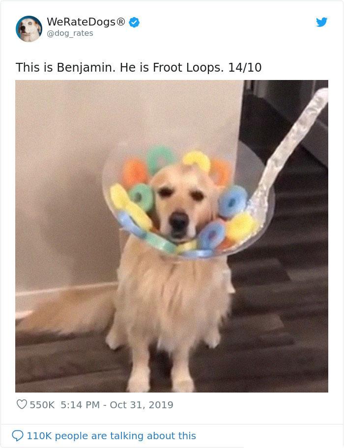 we rate dogs benjamin froot loops