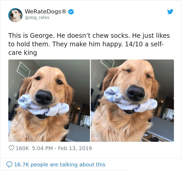 we rate dogs george loves holding socks
