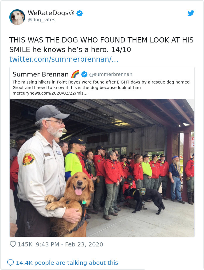 we rate dogs groot rescues missing hikers