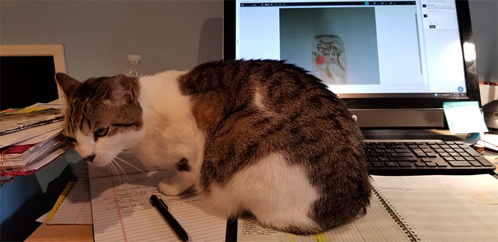 working from home cat co-worker