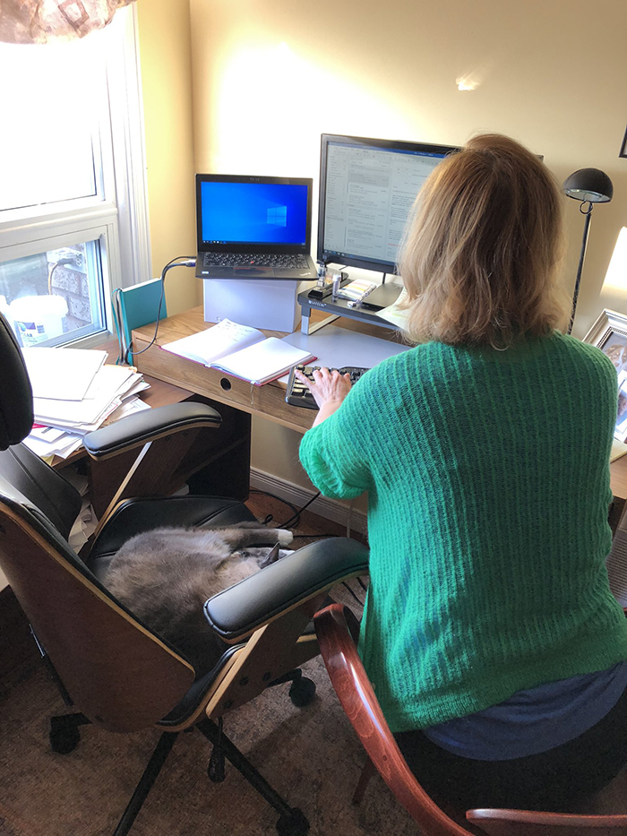 working from home cat invades office chair