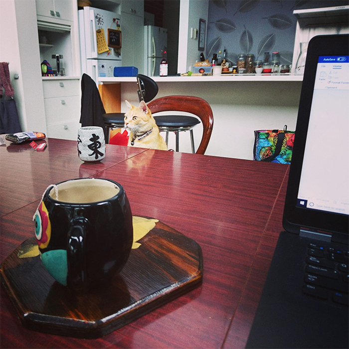 working from home meeting with cat