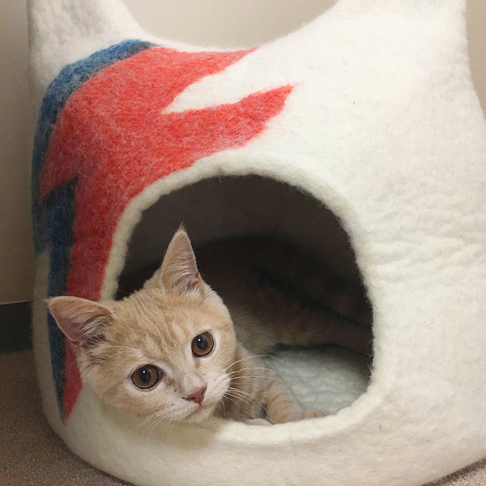 ziggy stardust-inspired cat bed white