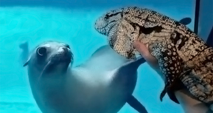 zoo animals meeting other animals