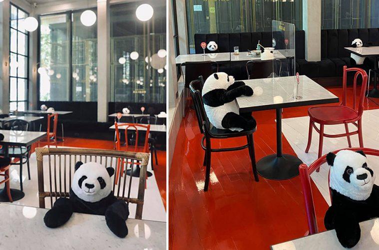 Maison Saigon pandas