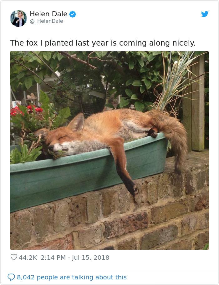 adorable fox pictures planter