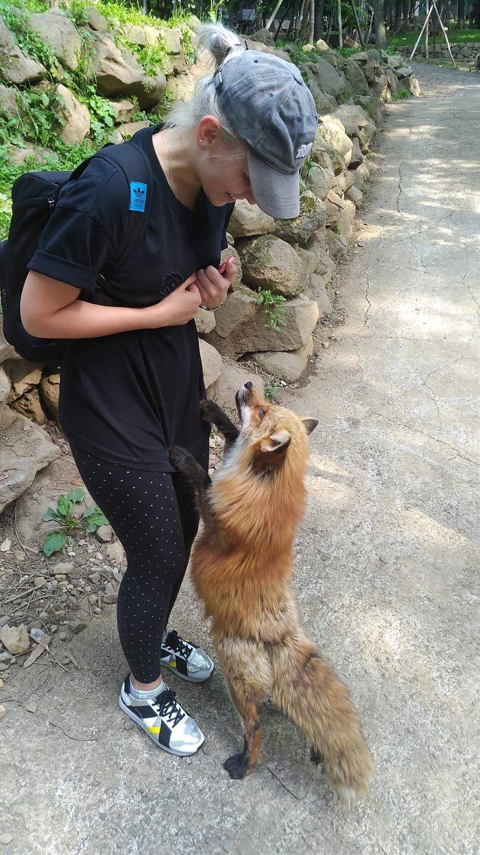 adorable fox pictures zao fox village japan