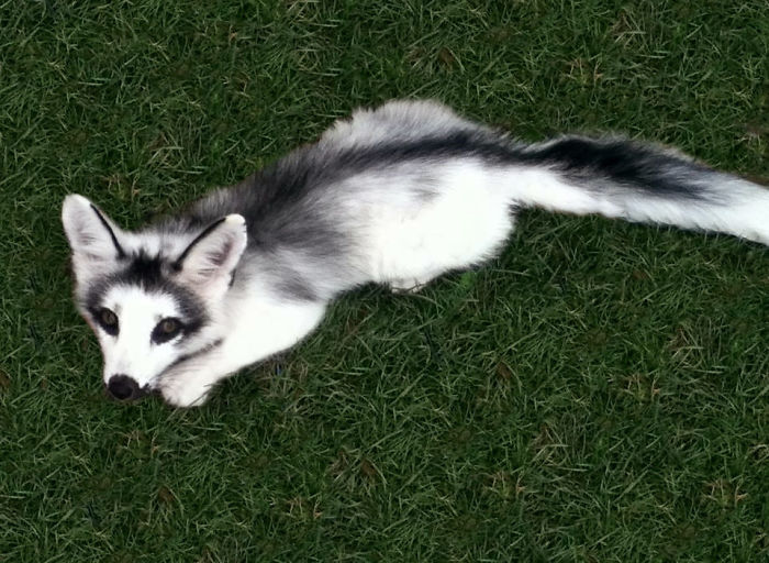 adorable marble wildfox