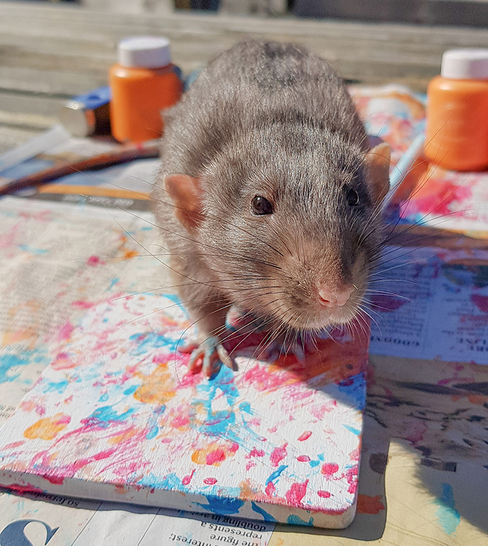 artistic pet rodent shows artistic skills