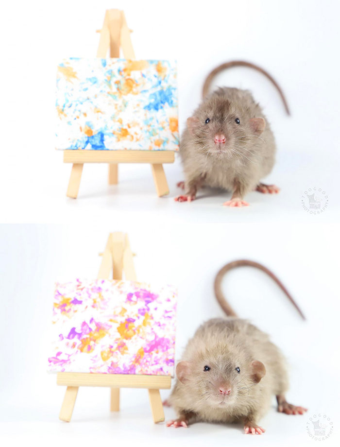 artistic rats paw prints paintings