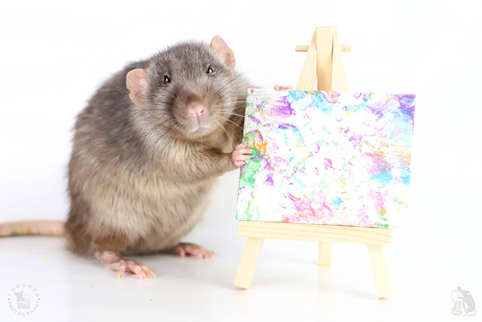 artistic rodent showing his artwork