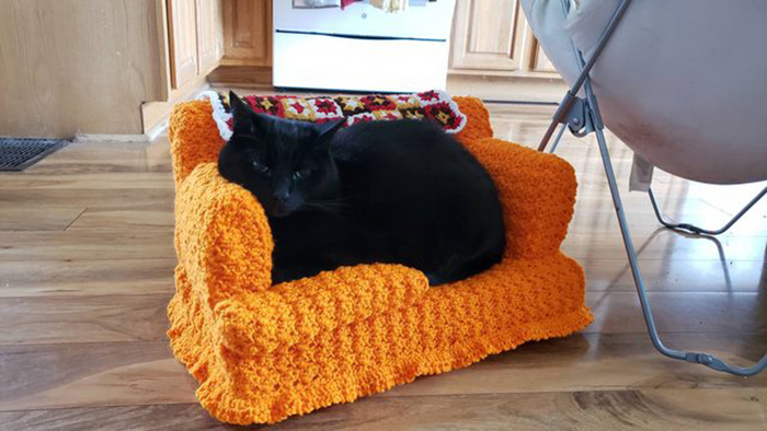 black cat sitting on orange cat couch