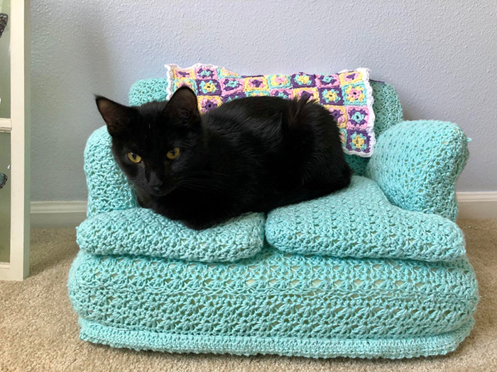black cat sitting on teal cat couch