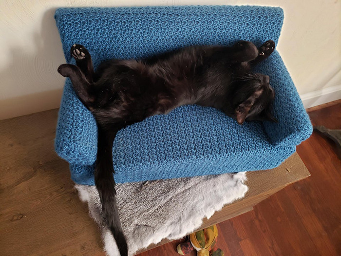 black cat sleeping on blue cat couch