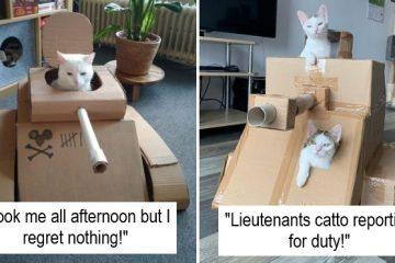 cardboard tanks