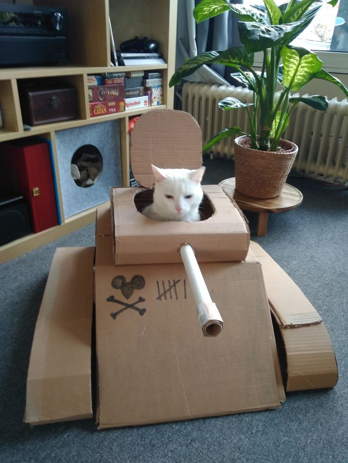 cardboard tanks for cats