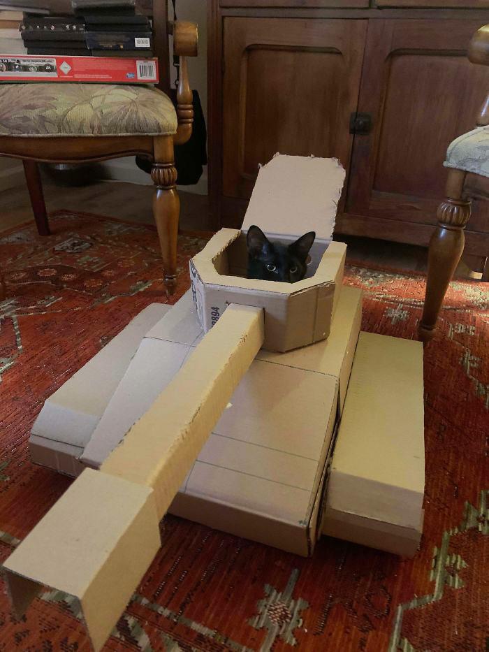 cat in cardboard tanks