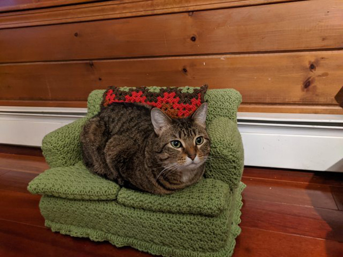 cat sitting on green cat couch