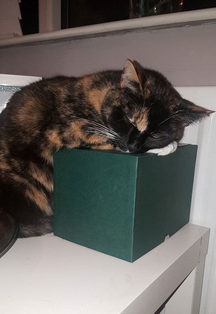cat stays on previous owner ashes