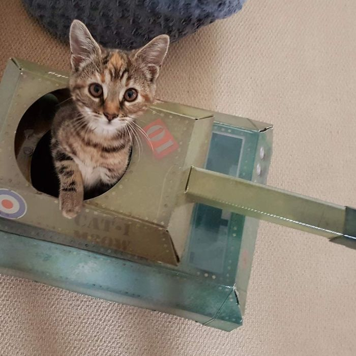 cat toy military vehicle
