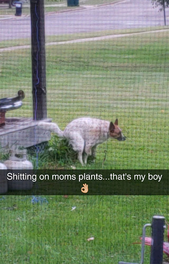 doggo pooping on plants