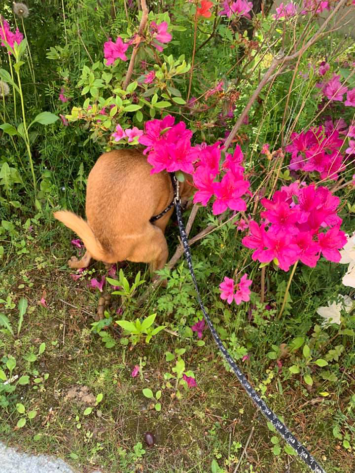 doggy pooping hiding in the flowers