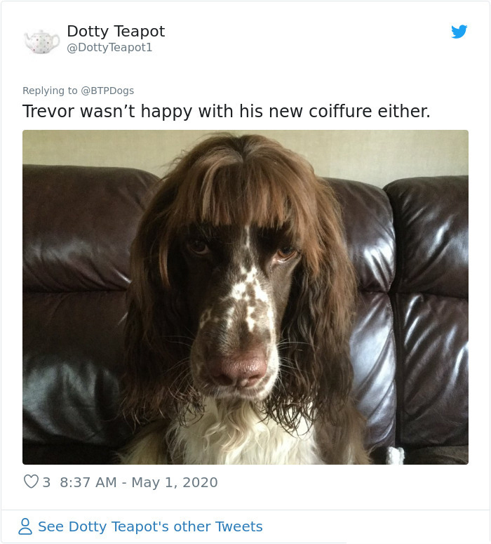 doggy with bangs look unhappy