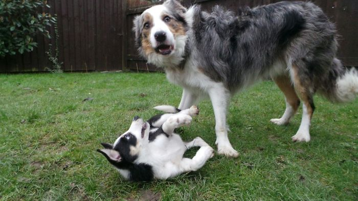 dogs bullying their younger siblings