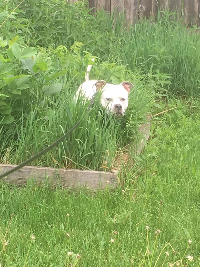 dogs in weird pooping positions hiding in the bushes