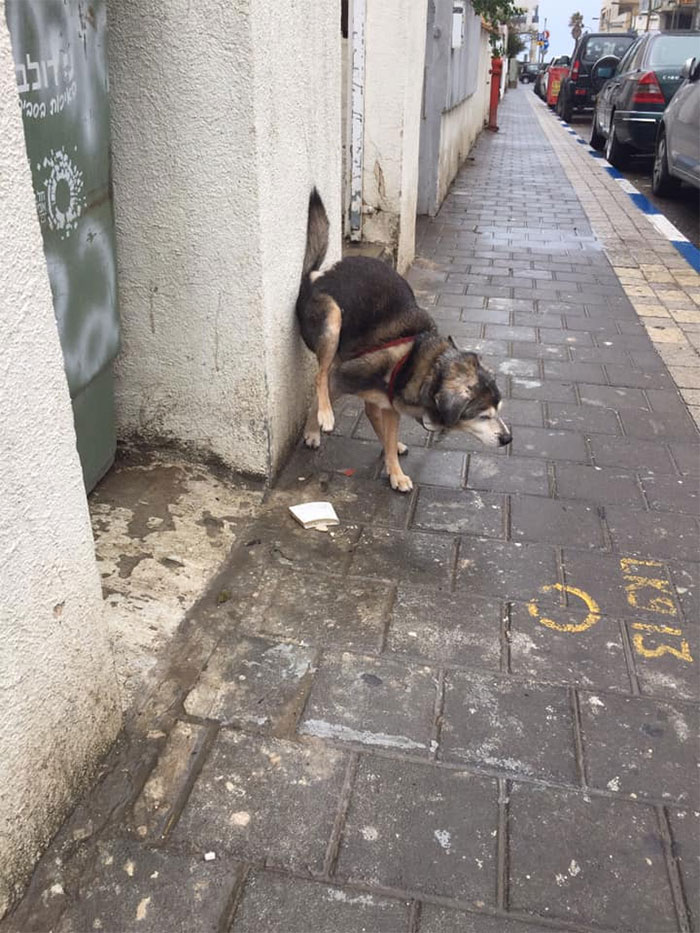 dogs in weird pooping positions wall leverage