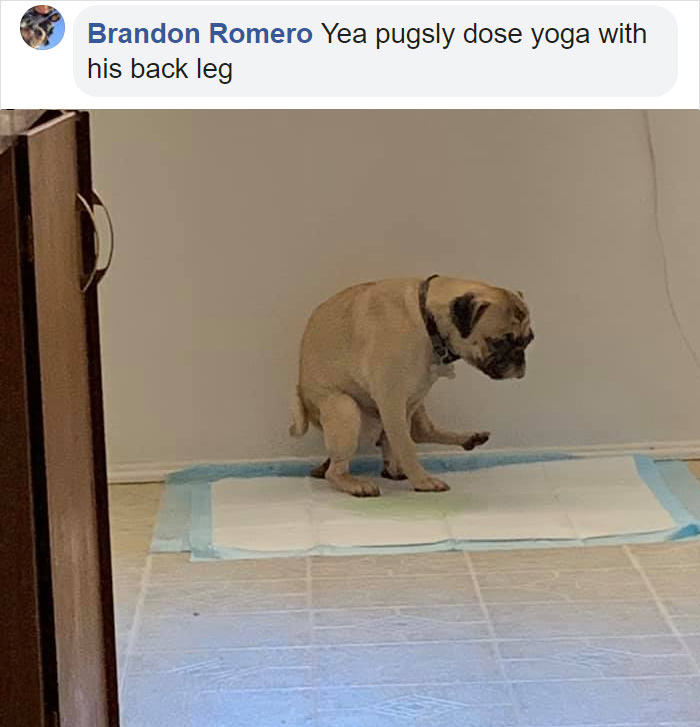 dogs in weird pooping positions yoga pose